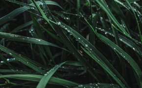 Картинка Капли, Трава, Зеленый, Green, Water, Plants, Drops, Флора, Plant, Growth, by Diana Chaplin, Diana Chaplin, …