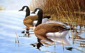 Картинка трава, вода, птицы, природа, отражение, река, берег, рисунок, две, утки, картина, арт, пара, живопись, водоем, …