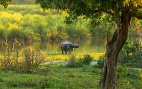 Картинка зелень, свет, пейзаж, ветки, природа, мокрый, озеро, дерево, берег, носорог, кусты, водоем, после купания