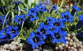 Картинка цветы, яркие, сад, колокольчики, клумба, большие, синие