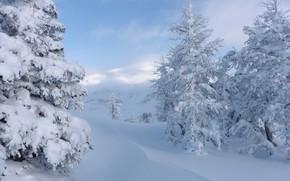 Картинка зима, снег, деревья, Канада, сугробы, Альберта, Banff National Park, Alberta, Canada, Национальный парк Банф