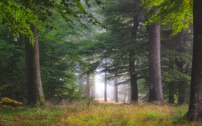 Картинка осень, лес, трава, листья, деревья, ветки, природа, туман, заросли, стволы, поляна, растительность, листва, утро, дымка, …
