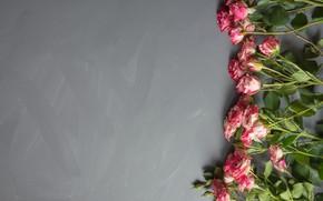 Картинка цветы, розы, букет, розовые, бутоны