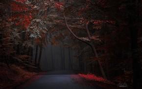 Обои дорога, осень, лес, Janek Sedlar
