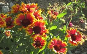 Картинка цветы, солнечно, клумба, Mamala ©, лето 2018