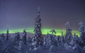 Картинка зима, снег, деревья, северное сияние, Финляндия, Finland, Lapland, Лапландия, звёздное небо