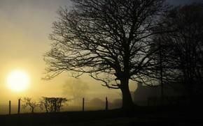Картинка туман, дом, утро, изгородь