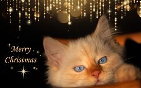 Картинка взгляд, сияние, темный фон, котенок, блеск, новый год, рождество, котёнок, поздравление, открытка, оформление