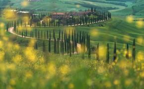 Картинка дорога, поле, лето, деревья, цветы, холмы, желтые, луг, Италия, домики, поселение, кипарисы, Тоскана, зеленые луга