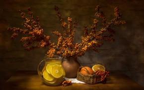 Картинка ветки, ягоды, апельсины, напиток, кувшин, корзинка, цитрусы, облепиха, Татьяна Феденкова