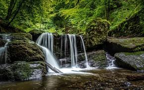 Картинка лес, деревья, фото, водопад