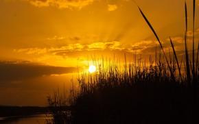 Картинка поле, пейзаж, закат, природа, красота