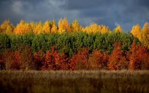 Картинка Небо, Облака, Трава, Осень, Лес, Сосны