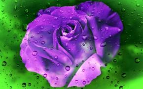 Картинка цветок, стекло, свет, дождь