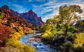 Картинка деревья, пейзаж, горы, природа, река, каньон, Юта, США, кусты, национальный парк, Зайон
