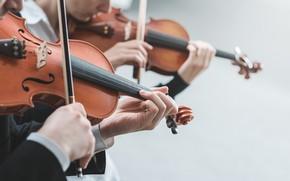Картинка Музыка, Струны, Скрипки