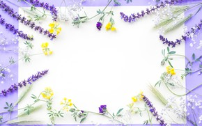 Картинка цветы, полевые, yellow, flowers, purple, frame