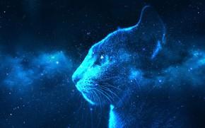 Картинка кошка, небо, кот, взгляд, морда, космос, звезды, свет, ночь, темный фон, рендеринг, фантастика, голубой, коллаж, …