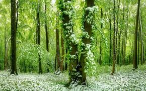 Картинка лес, снег, весна