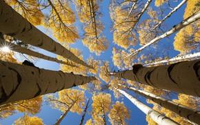 Картинка осень, небо, берёзы