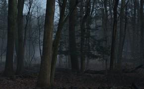 Картинка лес, деревья, природа, сумерки