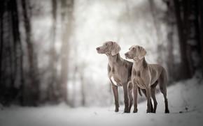 Картинка собаки, природа, фон