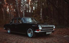 Картинка осень, лес, листья, тюнинг, чёрная, диски, сбоку, номера, колёса, Волга, ГАЗ, классический автомобиль, ГАЗ-24, чёрная …