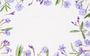 Картинка цветы, фон, рамка, фиолетовые, flowers, violet, frame, floral