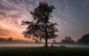 Картинка туман, дерево, рассвет, утро