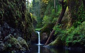 Картинка Природа, Водопад, Скалы, Деревья, Река, Лес, Ствол