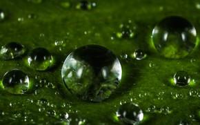 Картинка Капли, Растение, Зеленый, Роса, Green, Water, Wet, Drops, Plant, Dew, Droplet, Droplets, Close-Up, Капли росы, …