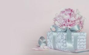 Картинка цветы, день рождения, подарок