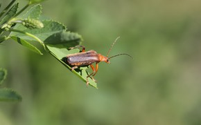 Картинка фон, жук, травка