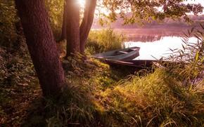 Картинка трава, деревья, пейзаж, природа, озеро, стволы, лодки, утро, берега, Алексей Платонов