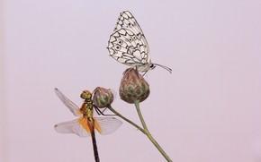 Картинка фон, бабочка, стрекоза, стебель