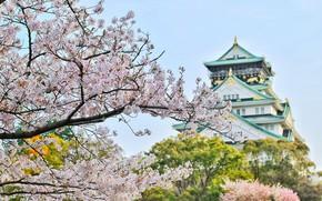 Картинка храм, строение, цветущая сакура, Bagus Pangestu, японская архитектура