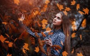 Картинка осень, взгляд, листья, девушка, поза, ветка, платье, Sergey Piltnik