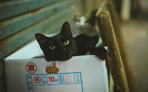 Картинка кошка, кот, взгляд, морда, кошки, поза, стена, коробка, черный, коты, портрет, лапы, лежит, два, боке, …