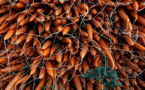 Картинка еда, овощи, морковки