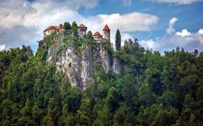 Картинка лес, скала, замок