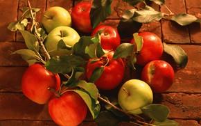 Картинка листья, яблоки, урожай
