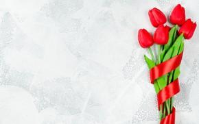 Картинка букет, лента, тюльпаны, бутоны