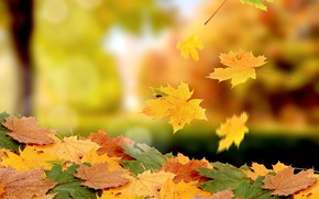 Картинка фото, листва, боке