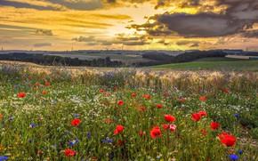 Картинка лето, небо, облака, закат, цветы, тучи, маки, луг, маковое поле