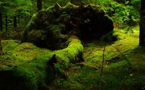 Картинка Природа, Дерево, Лес, Ствол, Мох
