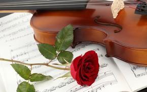 Картинка цветок, крупный план, ноты, скрипка, роза, тетрадь