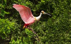 Картинка bird, pink, wings, feathers, bokeh, beak