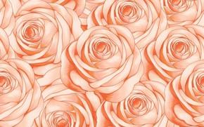 Картинка фон, розовый, розы, текстура, бутоны