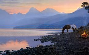 Картинка лес, закат, горы, природа, туман, галька, озеро, огонь, конь, рассвет, берег, лошадь, рисунок, вершины, графика, …