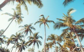 Картинка пляж, лето, небо, пальмы, summer, beach, beautiful, paradise, palms, tropical